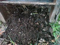 Finished compost full of worms