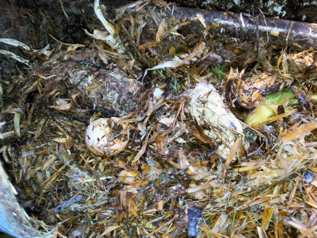Decomposing compost