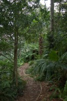 informal curved bark mulch path through a rainforest garden