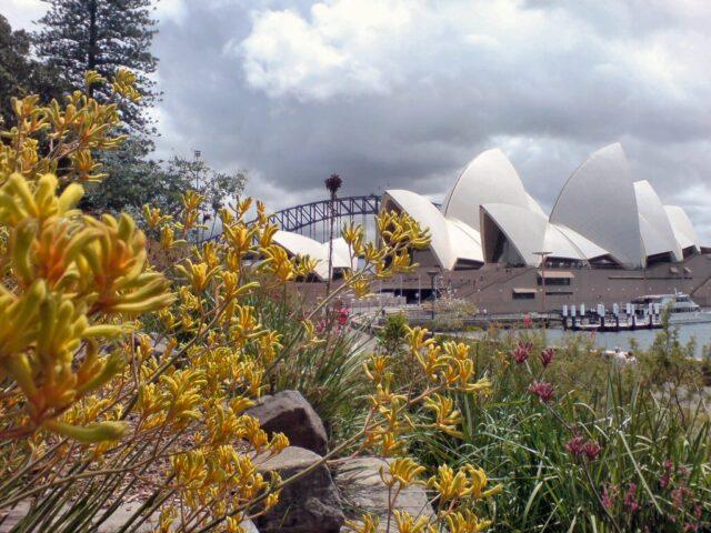 Two iconic Australian images- kangaroo paw against Opera House sails
