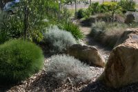 native landscaping by mallee design using smoke bush, lomandra, eucalypts, kangaroo paw