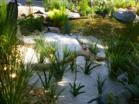 Natural pond feature with kangaroo paws and rushes
