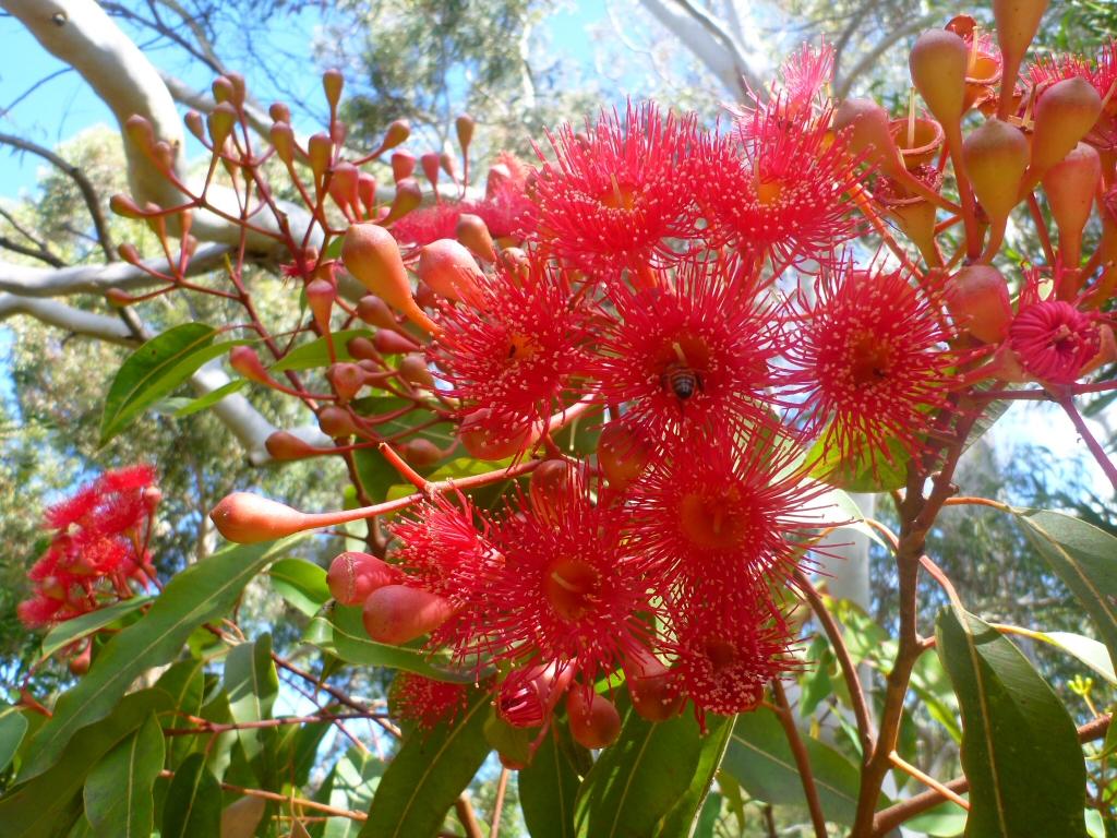 Angus's Top Ten Small Australian Trees | Gardening With Angus