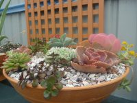 mixed pot of succulents with a diversity of growth and colour