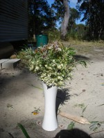 Bunch of Australian native wildflowers picked from the garden