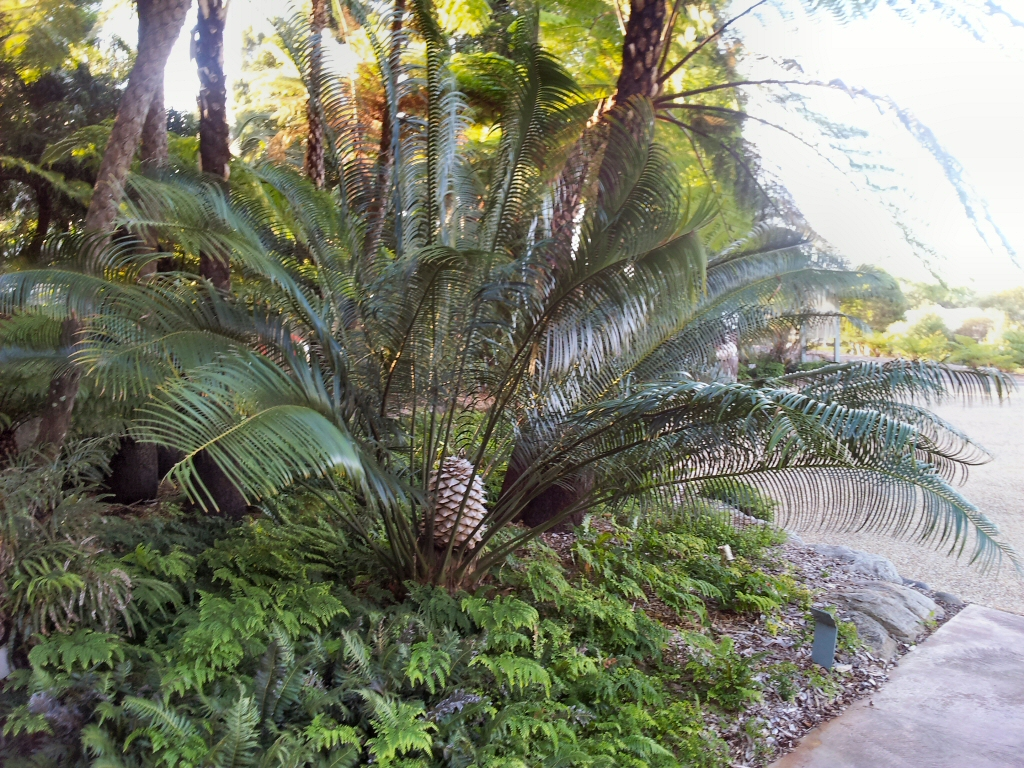 Australian Native Ferns Palms And Cycads Gardening With