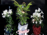 Dress up plants for christmas presents