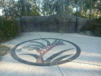 Paving with kangaroo paw at Kings Park Botanic Garden