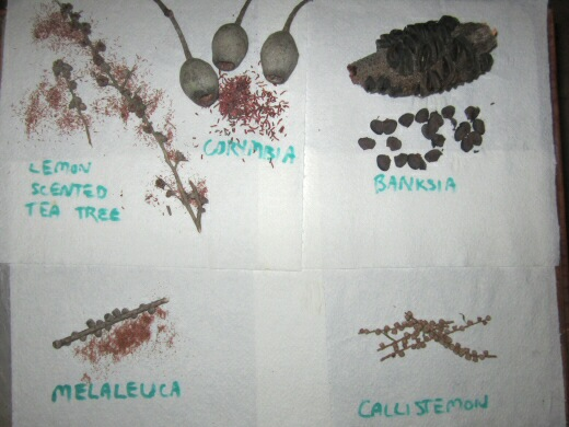 Seeds From Woody Seed Pods Ejected After Microwaving