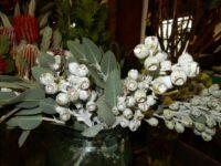 gumnuts make great cut flowers