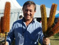 Banksia Giant candles and Angus Stewart
