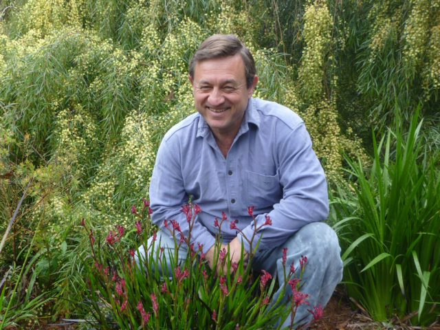 Angus Stewart kangaroo paws and wattle