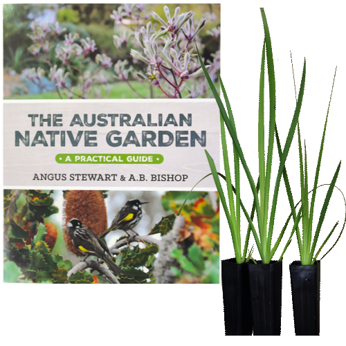 australian native garden kangaroo paw shop offer