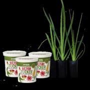 bush-tucker-three-tubs-plus-free-paws