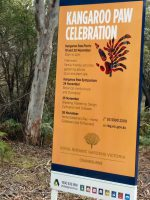 kangaroo paw celebration event at cranbourne gardens