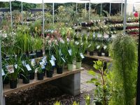 cool counrty native nursery Canberra