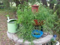 Composta system wgrowing Australian native edible plants