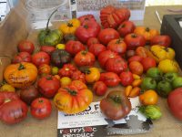 heirloom varieties of tomato