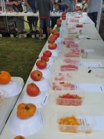 heirloom tomato competition judging tasmania