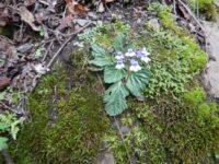 yunnan flora growing wild
