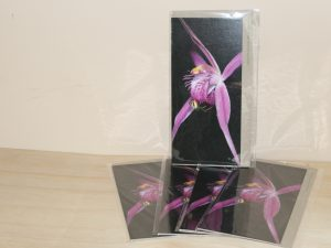 Pink spider orchid five card set
