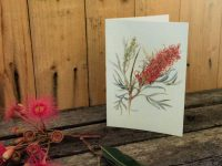 Australian wildflower card of Red Silky Oak