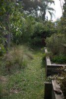 Green pathway using Dichondra