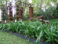 Dianella tasmanica flax-lily 'Emerald Arch'