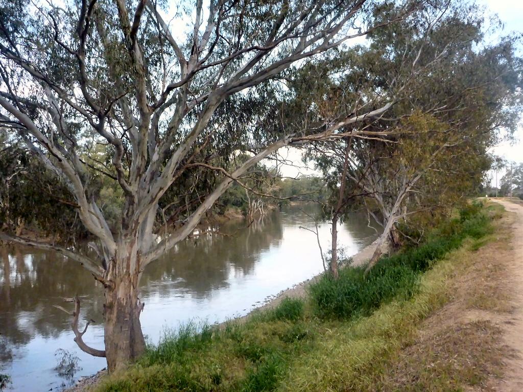 Top Ten Large Australian Trees