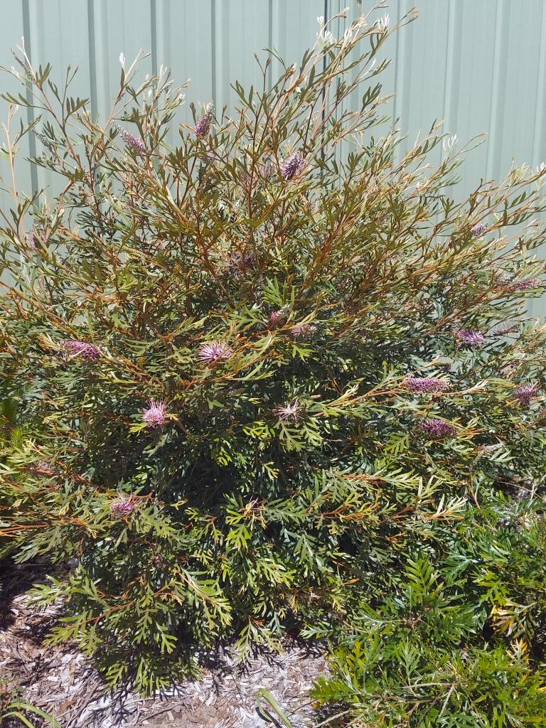 Semi Shade Plants