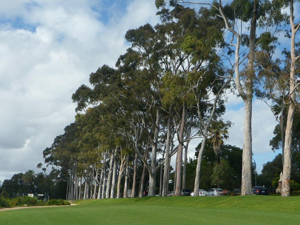 Top ten large australian trees gardening with angus for Garden design under gum trees