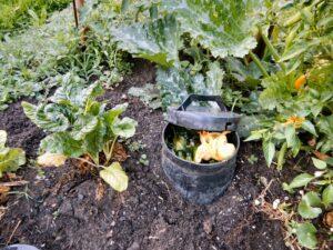 Worm Feast in situ in my vegie garden