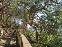 Angopheras at Bradleys Head National Park