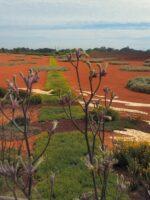 Landscape Violet at Cranbourne Botanic Gardens