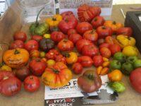 heirloom varieties of tomato